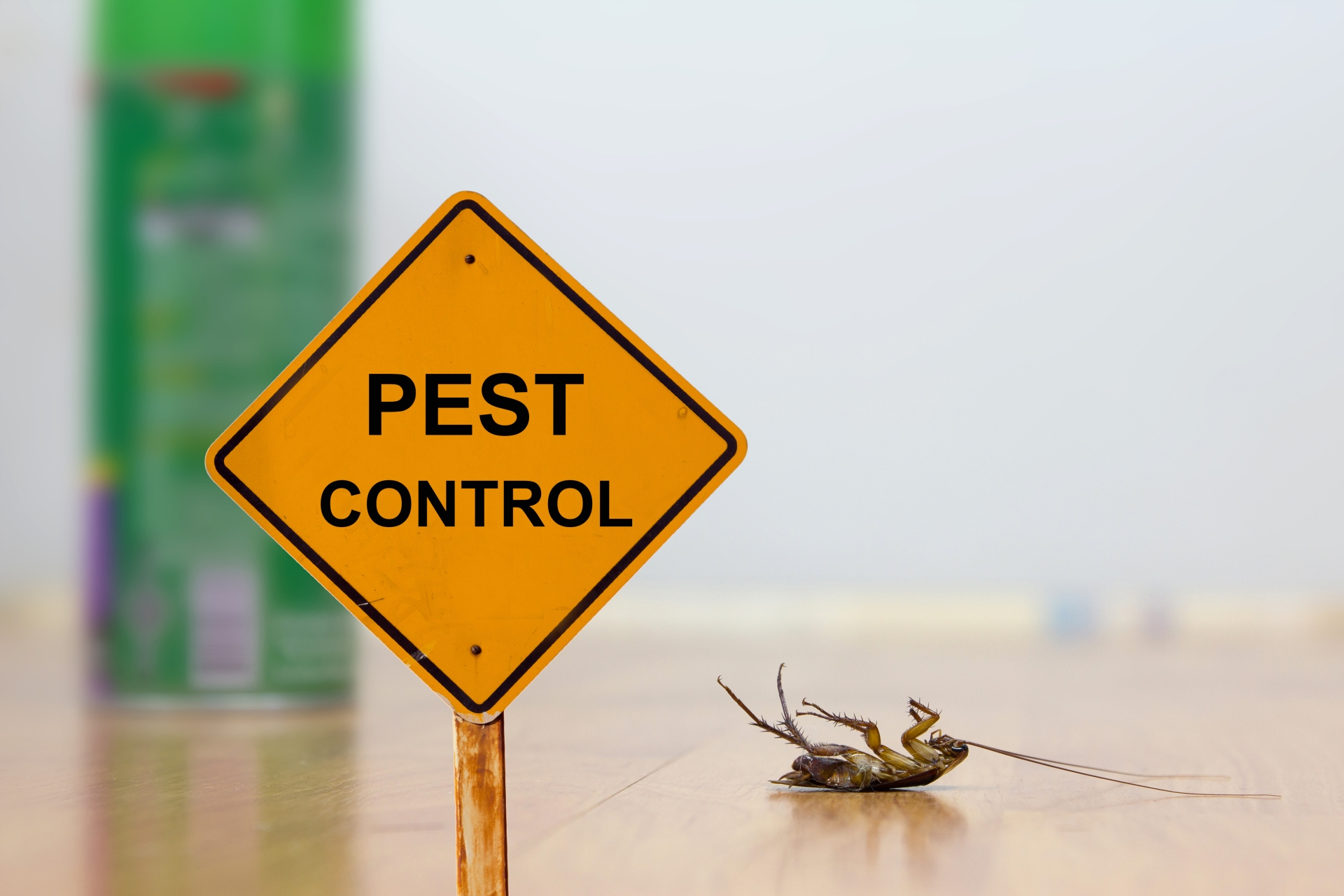 24 Hour Pest Control, Pest Control in Orsett, Chafford Hundred, RM16. Call Now 020 8166 9746