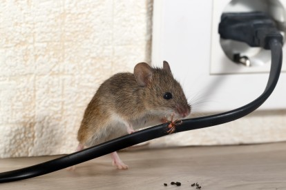 Pest Control in Orsett, Chafford Hundred, RM16. Call Now! 020 8166 9746