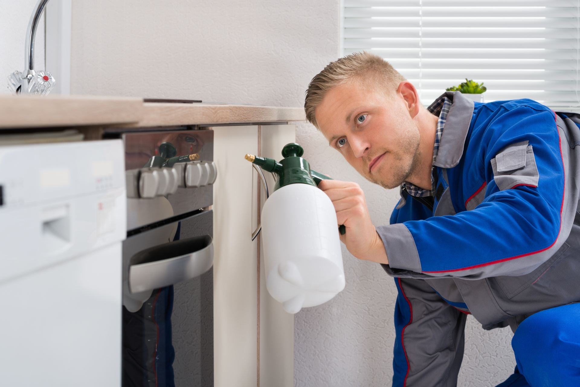 Pest Inspection, Pest Control in Orsett, Chafford Hundred, RM16. Call Now 020 8166 9746