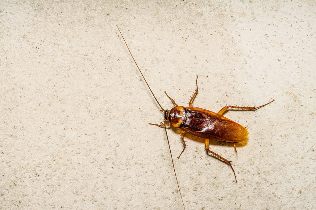 Cockroach Control, Pest Control in Orsett, Chafford Hundred, RM16. Call Now 020 8166 9746